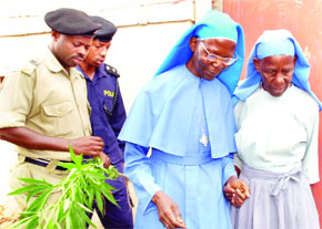 The two nuns being taken to the police station for questioning after a huge plantation of marijuana was found in the convents garden the nuns belonged to.