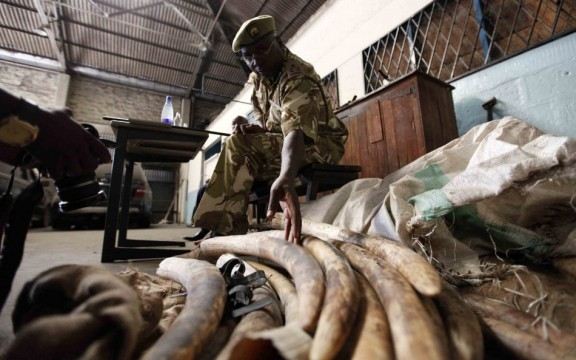 poaching-in-africa-elephant-tusks-nationalturk-0455