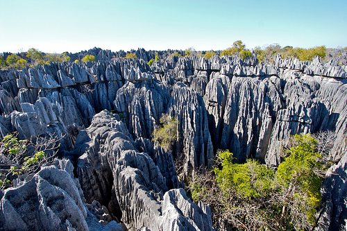 Madagascar: 90% of the species in Madagascar are found ...
