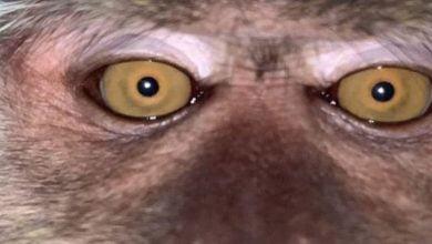 Photo of Kaybolan Telefondan Maymun Selfieleri ve Video Çıktı
