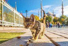 """Photo of """"Kedi Yiyen Kadın Serbest Bırakılacak"""""""