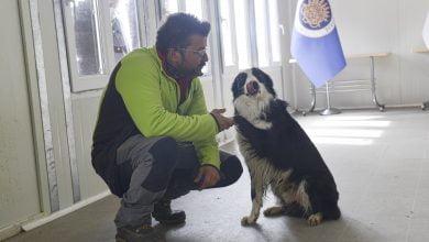 Photo of Ankara'da Kovid-19'u teşhis eden dedektör köpek yetiştirildi
