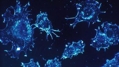 Photo of Araştırma: Kanser hücreleri uyku haline geçerek kemoterapiden kaçabilir