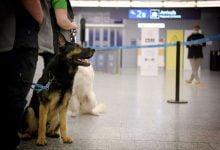 Photo of Finlandiya'da korona testini köpekler yapıyor